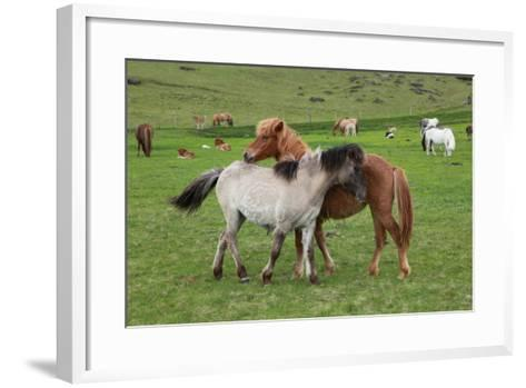 Island Pferde- Siegmar-Framed Art Print