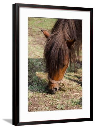 Pony Horse in Nature in Mountain Ethno Village- radulep-Framed Art Print