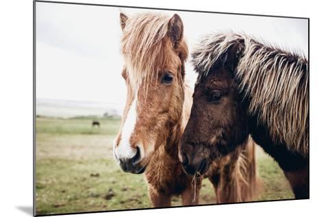 Icelandic Horses-Andrew Bayda-Mounted Photographic Print