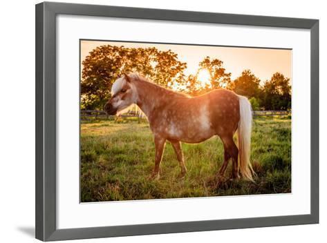 Shetland Pony-Alexey Stiop-Framed Art Print
