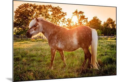 Shetland Pony-Alexey Stiop-Mounted Photographic Print