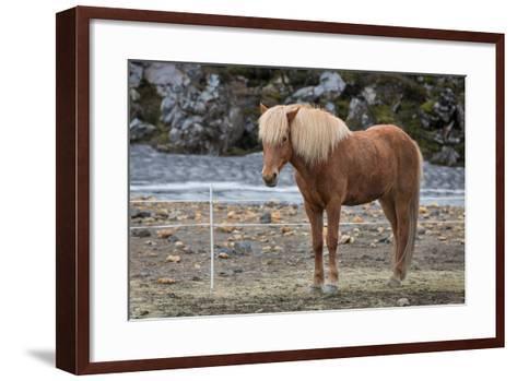 Icelandic Horses-F C G-Framed Art Print