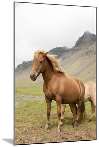 Horse- tonda55-Mounted Photographic Print