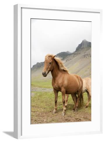 Horse- tonda55-Framed Art Print
