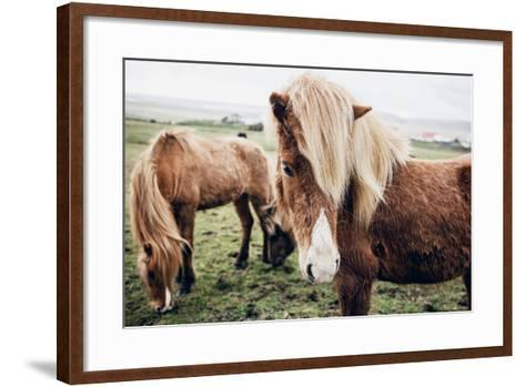Icelandic Horses-Andrew Bayda-Framed Art Print