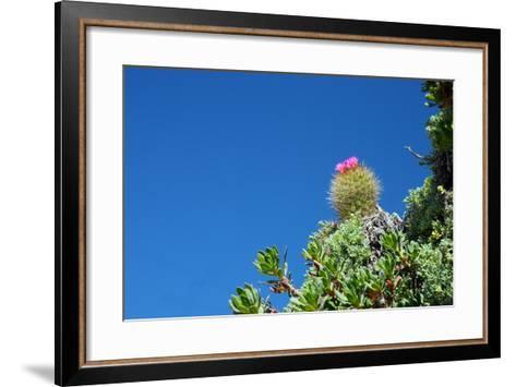 Pianta Grassa Cilena-michele pautasso-Framed Art Print