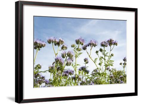 Lila Foliage with Bees against Blue Sky-YellowPaul-Framed Art Print