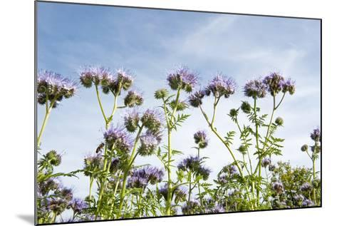 Lila Foliage with Bees against Blue Sky-YellowPaul-Mounted Photographic Print