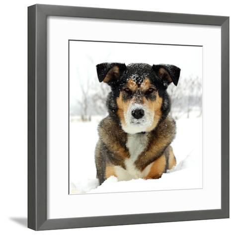 German Shepherd Dog Laying in Snow-Christin Lola-Framed Art Print