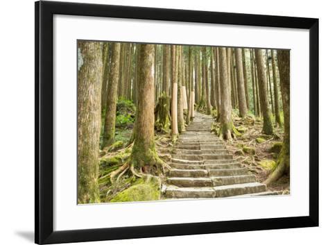 Stairway Alishan Forest- hin255-Framed Art Print