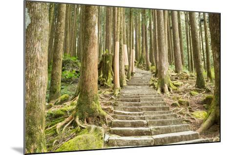Stairway Alishan Forest- hin255-Mounted Photographic Print