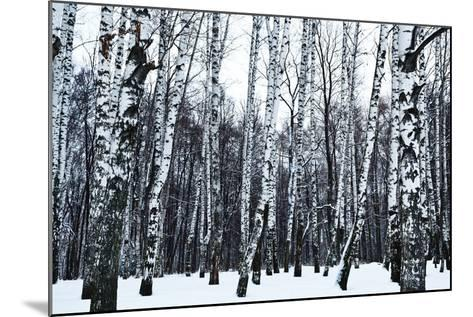 View of Snowy Birch Forest in Winter- vvoe-Mounted Photographic Print