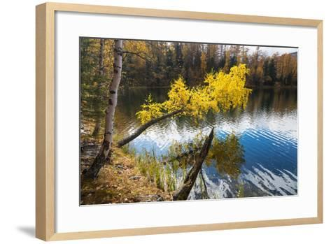 Autumn, Birch with Yellow Leaves over a Lake-Vensk-Framed Art Print