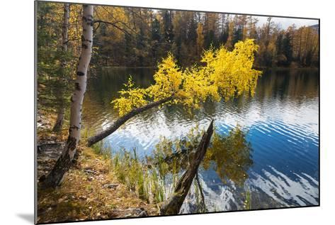 Autumn, Birch with Yellow Leaves over a Lake-Vensk-Mounted Photographic Print
