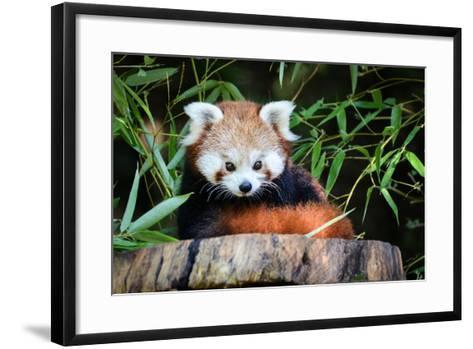 Red Panda-_jure-Framed Art Print