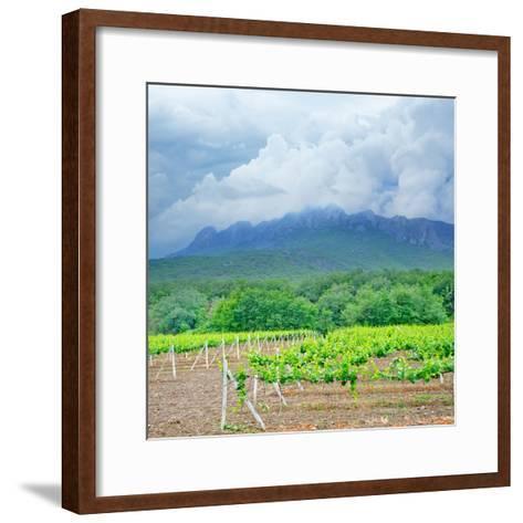 Vineyards-tycoon101-Framed Art Print