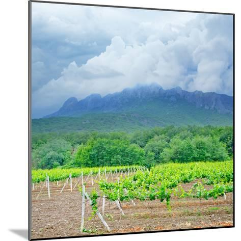 Vineyards-tycoon101-Mounted Photographic Print