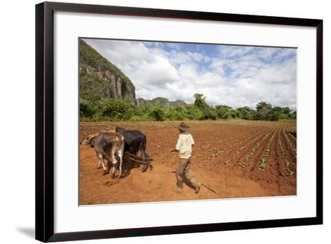 The Farmer in Vinales Valley, Cuba-Hakki Ceylan-Framed Art Print