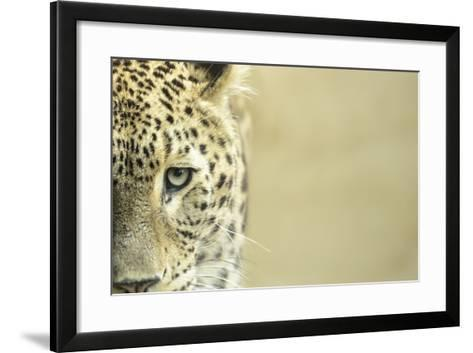 Leopard Sad Eyes Captivity close Up-stefano pellicciari-Framed Art Print
