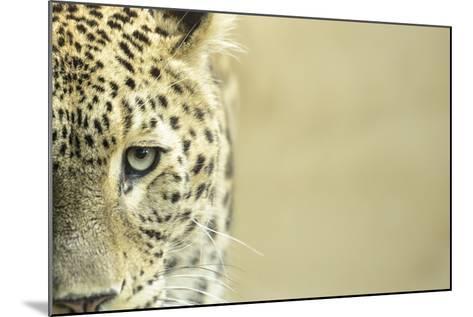 Leopard Sad Eyes Captivity close Up-stefano pellicciari-Mounted Photographic Print