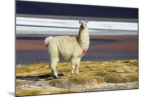 Alpaca in Salar De Uyuni, Bolivia Desert-padchas-Mounted Photographic Print