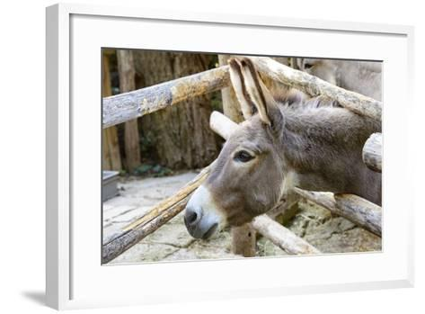 Curious Donkey Staring Profile View-stefano pellicciari-Framed Art Print