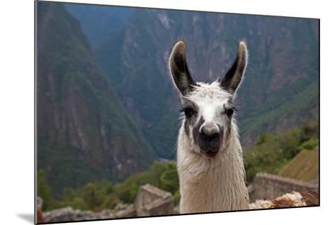 Alpaca at Machu Picchu-Gail Johnson-Mounted Photographic Print