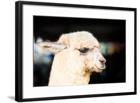 Alpaca-fotoslaz-Framed Art Print