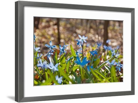 Blue Snowdrops-Nataliya Dvukhimenna-Framed Art Print
