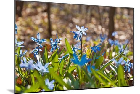 Blue Snowdrops-Nataliya Dvukhimenna-Mounted Photographic Print