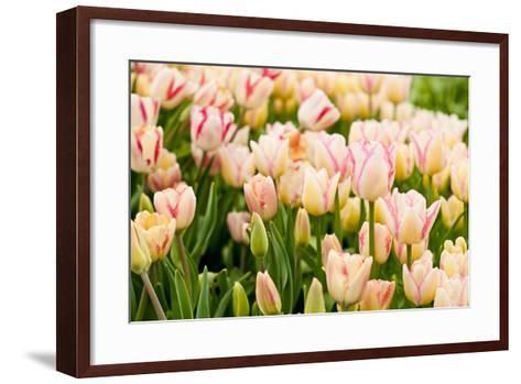 Beautiful Tulips-Nataliya Dvukhimenna-Framed Art Print