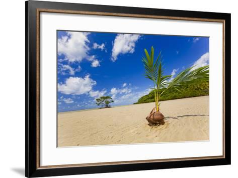 Sprouting Coconut-EvanTravels-Framed Art Print
