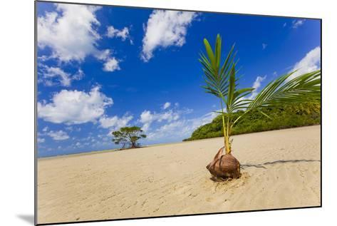 Sprouting Coconut-EvanTravels-Mounted Photographic Print
