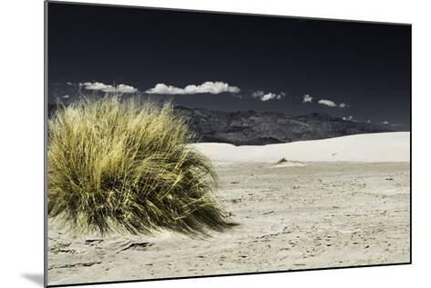 Bush Death Valley- RJPhotography-Mounted Photographic Print