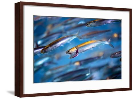 School of Swimming Anchovies-EvanTravels-Framed Art Print