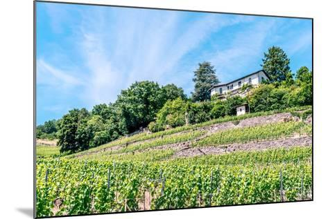 The UNESCO World Heritage Site of the Lavaux Vineyards near Lausanne in Switzerland.- albinhillert-Mounted Photographic Print