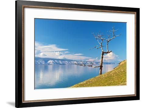 Picturesque Dry Larch on the Shores of Lake Baikal-katvic-Framed Art Print