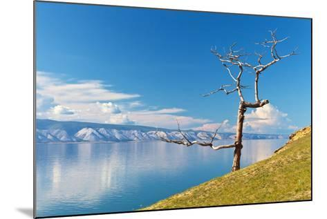 Picturesque Dry Larch on the Shores of Lake Baikal-katvic-Mounted Photographic Print