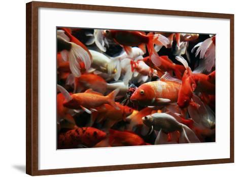 Japanese Koi-zingiber-Framed Art Print