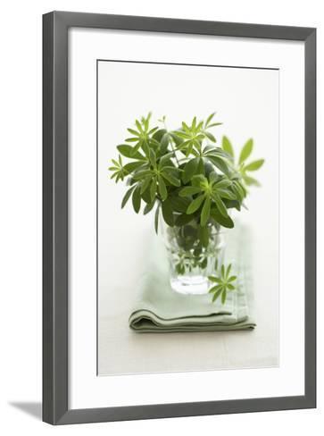 Woodruff in a Glass of Water-Marc O^ Finley-Framed Art Print