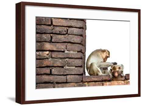 Bear-Faced Monkeys in Lopburi, Thailand-EvanTravels-Framed Art Print