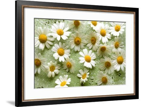 Daisies-Walter Cimbal-Framed Art Print