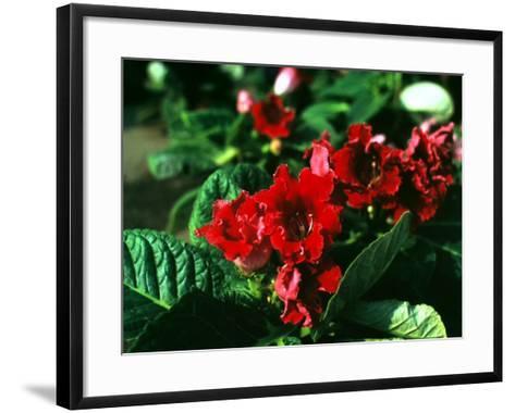 Rhododendron in Bloom-A^ Villani-Framed Art Print