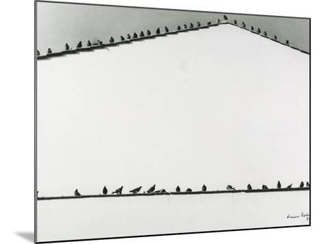 Pigeons-Vincenzo Balocchi-Mounted Photographic Print