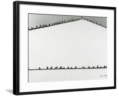 Pigeons-Vincenzo Balocchi-Framed Art Print