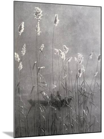 Wild Flowers Growing on Te Banks of a Pond--Mounted Photographic Print