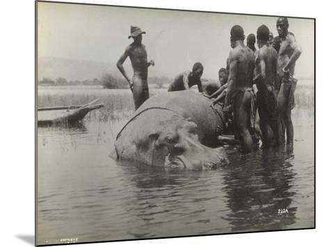 Natives During the Capture of a Hippopotamus--Mounted Photographic Print