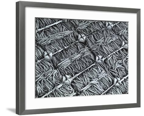 Wooden Crates Containing Green Beans-A^ Villani-Framed Art Print