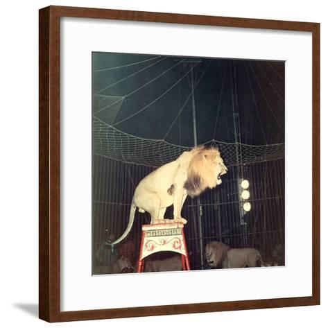 Lion Standing on a Pedestal Inside a Circus Cage Roaring-A^ Villani-Framed Art Print