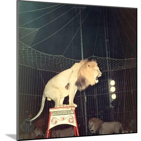 Lion Standing on a Pedestal Inside a Circus Cage Roaring-A^ Villani-Mounted Photographic Print